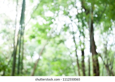 pic of bamboo forest to use as background