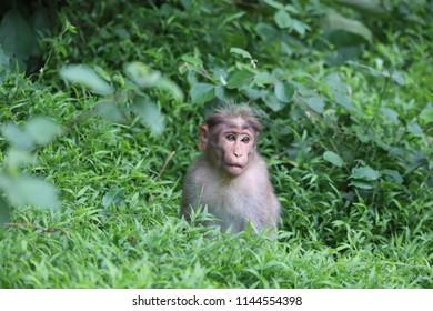 A pic of monkey