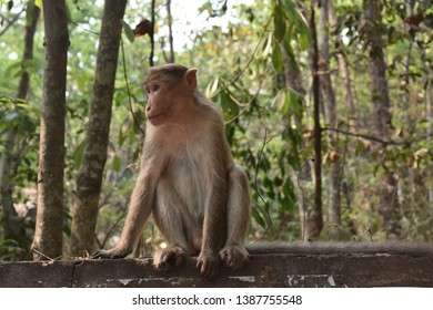 Pic of a monkey that I have clicked while I was in Malappuram district of Kerala, India.