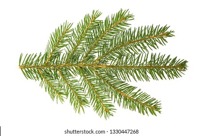 Picea abies, spruce isolated on a white background. Spruce (Picea abies) branch and needles isolated on white background.