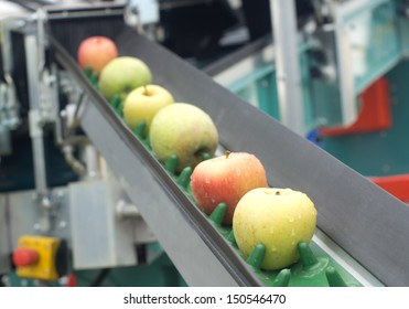 Picked apples on a conveyor belt