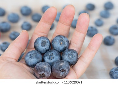 picked big blueberries in a female hand, blurry berry background