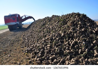 Picked up in a field of sugar beet harvest lies in a pile