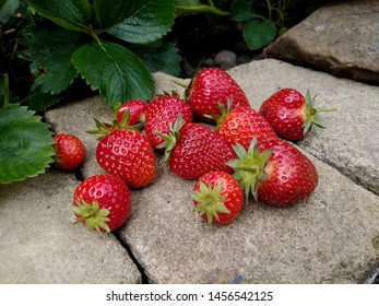 Picked strawberries on a dry stone wall