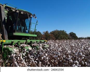 Picking Cotton Close-up