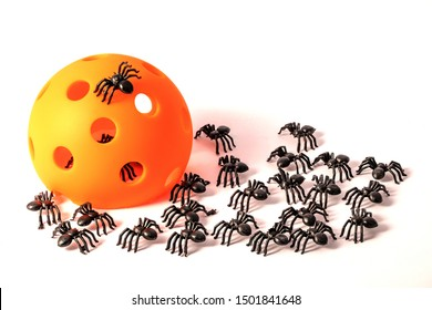 Pickleball Halloween with a large group of spiders and orange Pickleball on white background.
