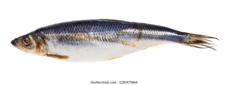 pickled herring fish isolated on white background