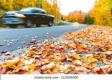 Pickup on countryside road with autumn colors and trees. Blurred car passing, focus on leaves on the ground in foreground. Travel and autumn concepts.
