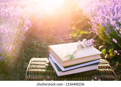 Picnic basket, old books under the rays of the setting sun. Romantic picnic concept at sunset in a fragrant lavender field