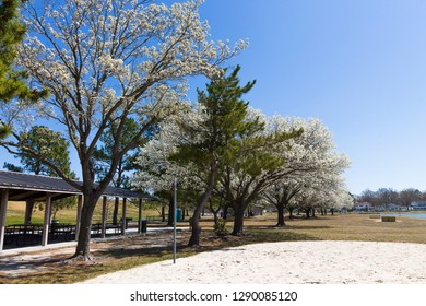 Picnic shelters and blooming dogwood trees at Mount Trashmore Park in Virginia Beach, Virginia.