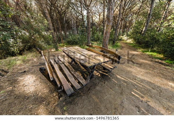 Astonishing Picnic Table Benches Pine Forest Stock Photo Edit Now Gmtry Best Dining Table And Chair Ideas Images Gmtryco