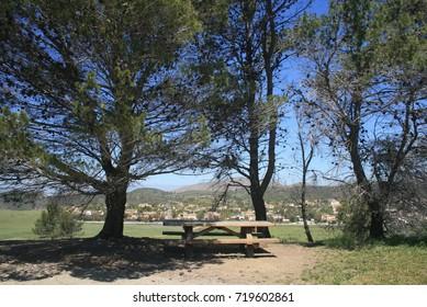 Picnic table beneath pines in a suburban park, California