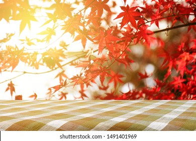 Picnic table with Japanese maple tree garden in autumn. Fully red Maple leaves in Autumn. Autumn background with warm evening light.