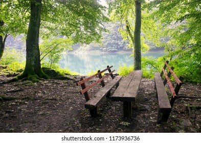 Picnic table near lake in spring forest