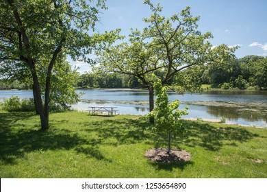 Picnic table on the lakeside at Herrick Lake Nature Preserve in Wheaton, Illinois