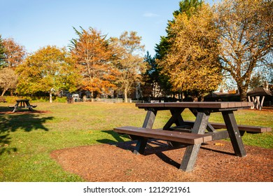 Picnic table in a park on a bright sunny day in Autumn