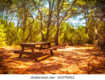 picnic table in the woods