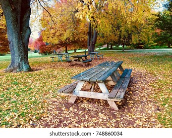 Picnic tables in autumn park.