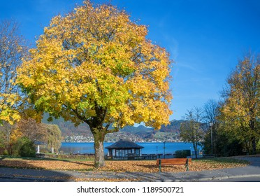 pictorial lakeside tegernsee with bench and gazebo, autumnal maple tree. tourist destination lake tegernsee in october.