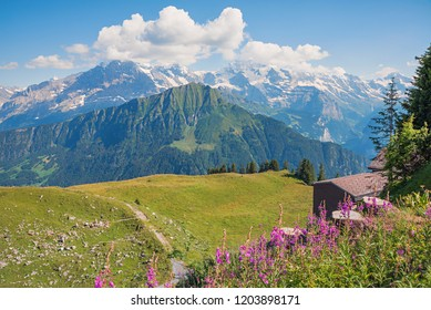 pictorial mountain landscape swiss alps. view from schynige platte to jungfrau area. famous tourist destination and hiking resort