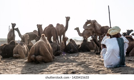 The Pictorial view of Pushkar Camel Fair story through lens : Pushkar, Rajasthan/India - Oct 2017