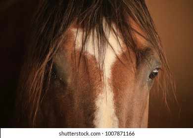 A picture of an adorable quarter horse. with a white heart,0n his forehead  that turns into a white blasé down the middle his face  and a shaggy forelock