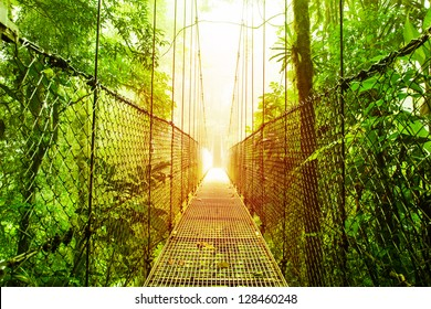 Picture of Arenal Hanging Bridges Ecological reserve, natural rainforest park, La Fortuna de San Carlos city, Costa Rica, Central America, footbridge in jungle, travel and tourism concept