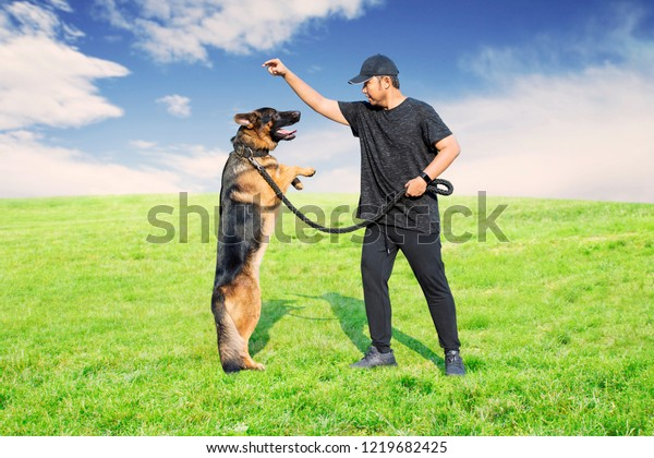 Picture of Asian man training his German Shepherd dog in the meadow