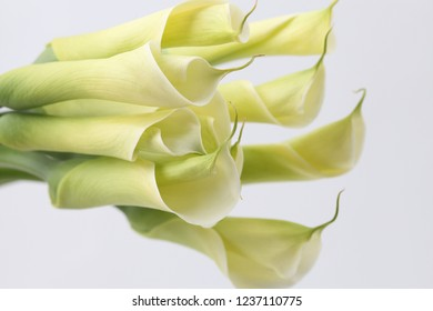 a picture of a beautiful, elated calla flower