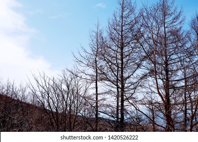 Picture of beautiful view outside the patio with snow mountain and autumn trees under the bright blue sky