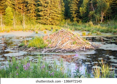 picture of a beaver dam in Elk Island National Park, Alberta, Canada.