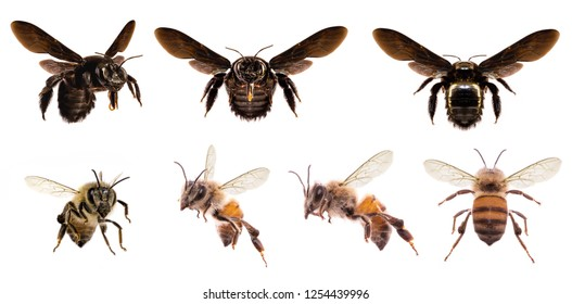 picture of bees on white background, bee on backs flying and other details, macro photography of insects