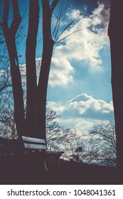 A picture of a bench near some trees against the blue cloudy sky.
