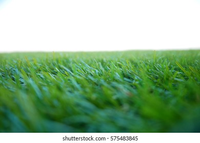 Picture blurred  for background abstract and can be illustration to article of grass
