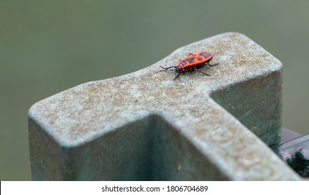 A picture of a box elder bug on top of a greenish stone ledge.