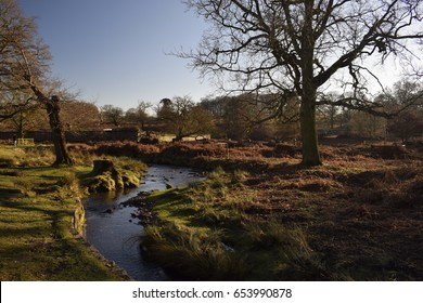 Picture from Bradgate Park near Leicester City, UK. Beautiful river with green all over the sides.
