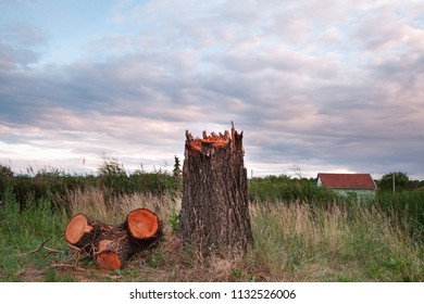 Picture of a broken tree by storm the field