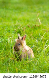 picture of a bunny rabbit in the grass. Easter concept. portrait of a young rabbit