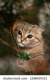 Picture of cat climbing on a new year tree