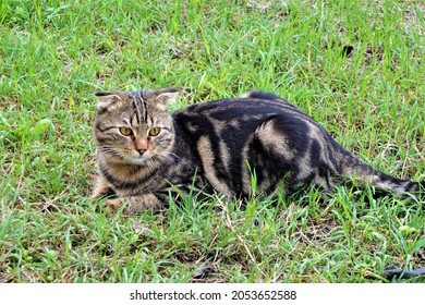 Picture of a cat in nature, Stock Photo