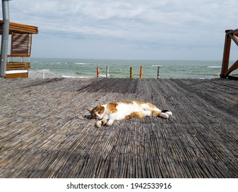 Picture of a cat sleeping peacefully at roof top, on the warm sun, with a seashore at the background. Cute sleeping white and red cat.