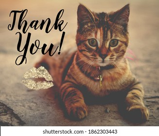 picture of a cat with the word thank you and kiss