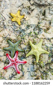 Picture of colourful starfish on a beach in Tanzania, Africa.