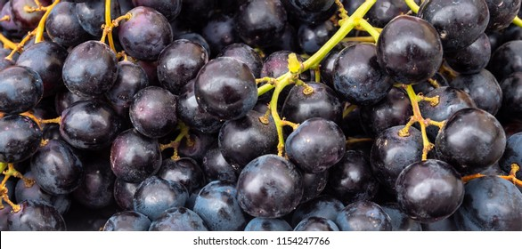 Picture of Concord Grapes ready to Eat