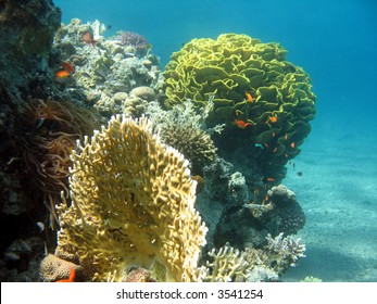 A picture of a coral reef. shot in the Red Sea