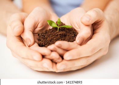 picture of couple hands with green sprout and ground