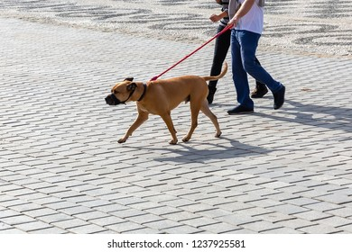 picture of a couple who walks with a muzzled dog