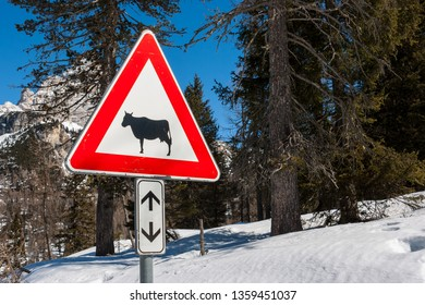 Picture of a Cow traffic european sign (red triangle) with mountains on background . Beware of the cow. A warning sign with cattle on european road symbol.