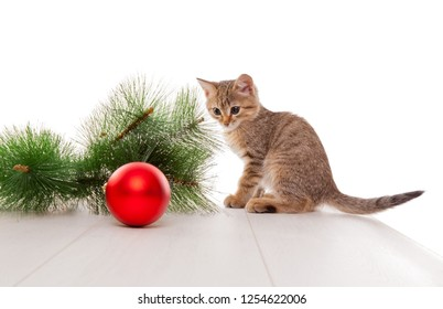 Picture of curious kitten playing with new year ball