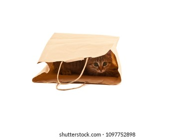 Picture of cute cat in paper pag isolated on white. Curiosity, funny kitten.